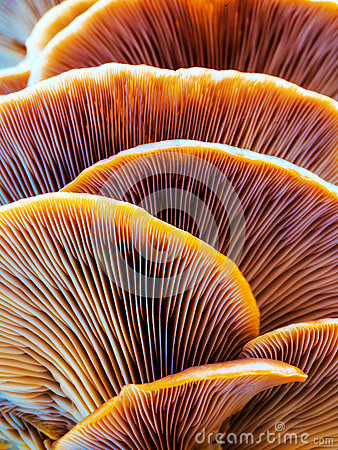 Free Wild Winter Forest Mushroom Stock Photography - 48604762