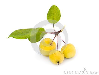 Wild yellow apples