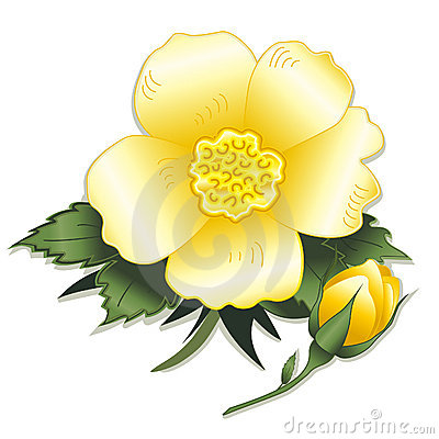 Free Wild Yellow Rose And Bud Royalty Free Stock Photos - 5649208