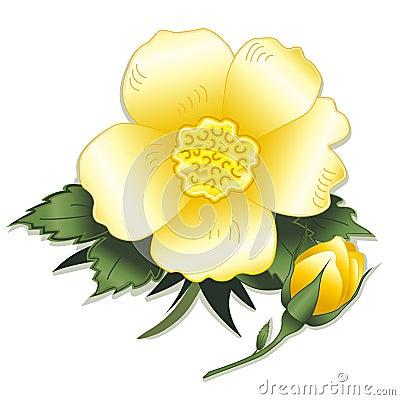 Wild Yellow Rose and Bud
