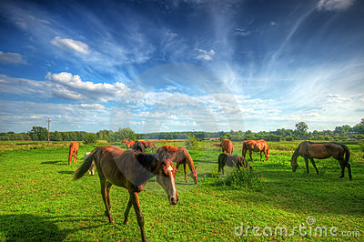 Wild young horse on the field