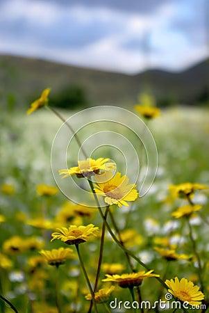 Wilde Blumen