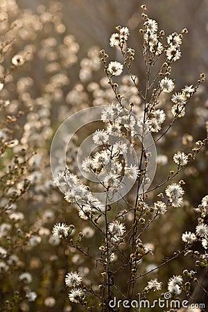 Wilde Blumen und Fauna