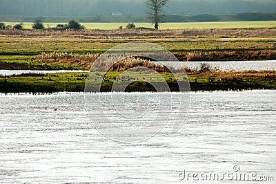 Wilde ganzen door de rivier
