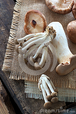 Wilde Pilze