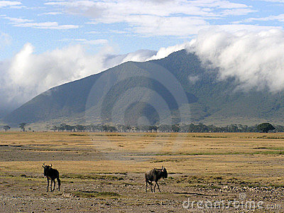 Wildebeast scenery in Ngorongoro Crater