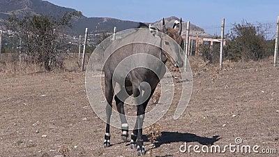 wildebeest filme