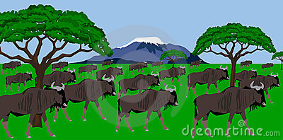 Wildebeest herd in african scenery