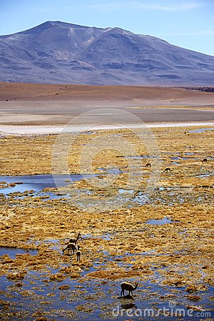 Wilderness of Andes mountain range
