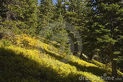 Wilderness groundcover