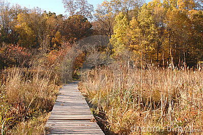 Wilderness ramp in marsh in autumn