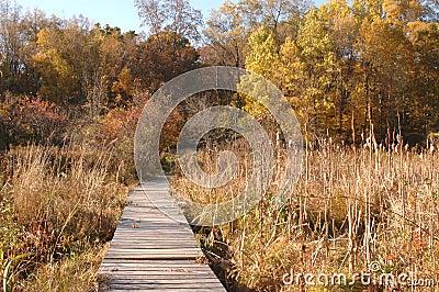 Wilderness ramp in marsh in autumn