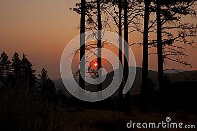 Wildfire Sunrise