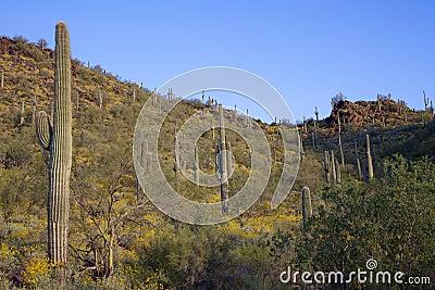 Arizona Desert Spring