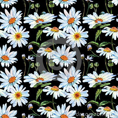 Free Wildflower Daisy Flower Pattern In A Watercolor Style. Royalty Free Stock Photos - 95600058