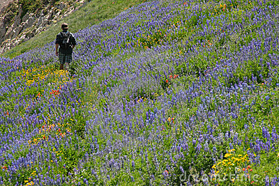 wildflower hiker