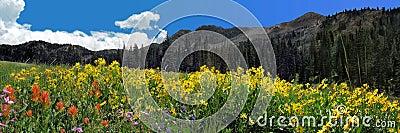 wildflower and mountain panoramic