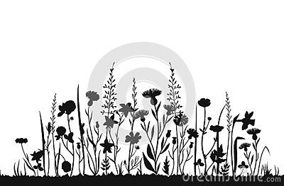 Wildflower silhouettes. Wild grass spring field. Herbal summer vector background Vector Illustration