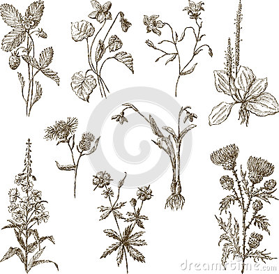 Free Wildflowers Royalty Free Stock Photo - 47240185