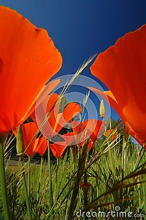 Free Wildflowers Stock Image - 721771