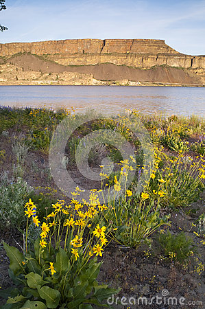 Free Wildflowers Around Banks Lake Steamboat Rock State Park Royalty Free Stock Photography - 33826767