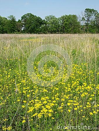 Wildflowers in een prairie van Illinois