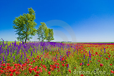 Wildflowers field