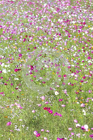 Wildflowers In Field Free Public Domain Cc0 Image