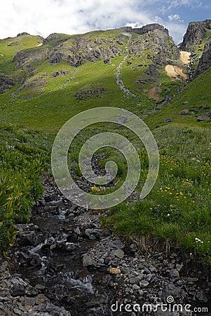 Free Wildflowers In San Juan Mountains In Colorado Royalty Free Stock Image - 10543536
