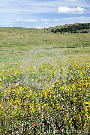 Wildflowers on the Mongolian Steppes