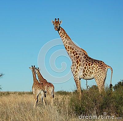 Free Wildlife Stock Photography - 6729142