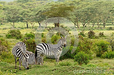 Wildlife in Africa