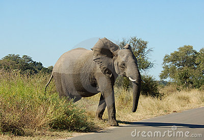 Wildlife: African Elephant Royalty Free Stock Images - Image: 10417429
