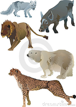 Wildlife animals
