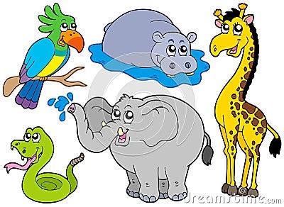 Wildlife animals collection