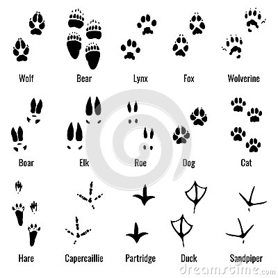 Free Wildlife Animals, Reptiles And Birds Footprint, Animal Paw Prints Vector Set Stock Images - 86067114