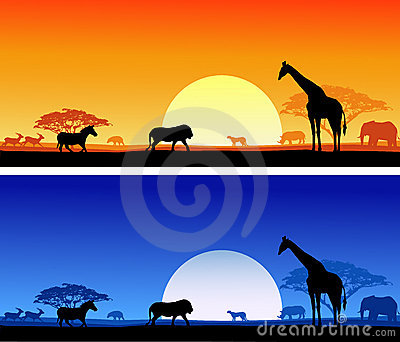 Wildlife background