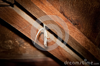 Wildlife Gecko on the wood ceiling background