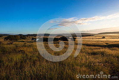 Wildlife Grass Plains Dawn Sunrise Stock Photography - Image: 26371922