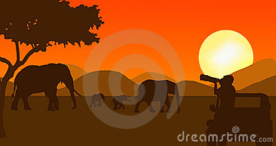Wildlife photographer in sunset