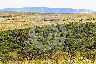 Wildlife Reserve Landscape
