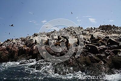 Wildlife on Rocks