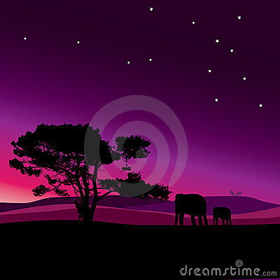 Wildlife star night in africa vector