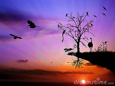 Wildlife sunset birds colorful illustration