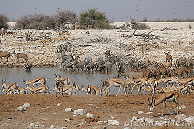 Wildlife at the waterhole