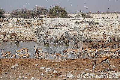 Wildlife at the waterhole