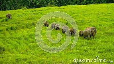 Wilds Elephant