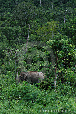 Wilds Elephant