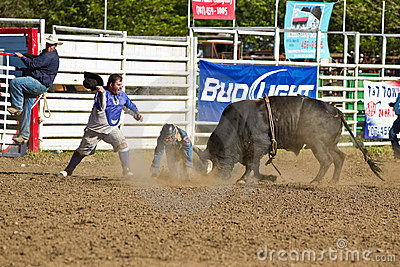 Willits Frontier Days Rodeo Editorial Stock Image