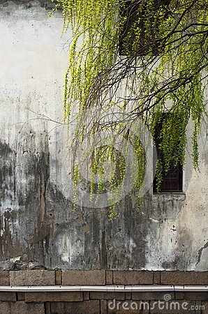 Free Willow And Old Wall At Suzhou Stock Photography - 114480962